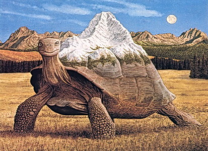 Turtlespirit